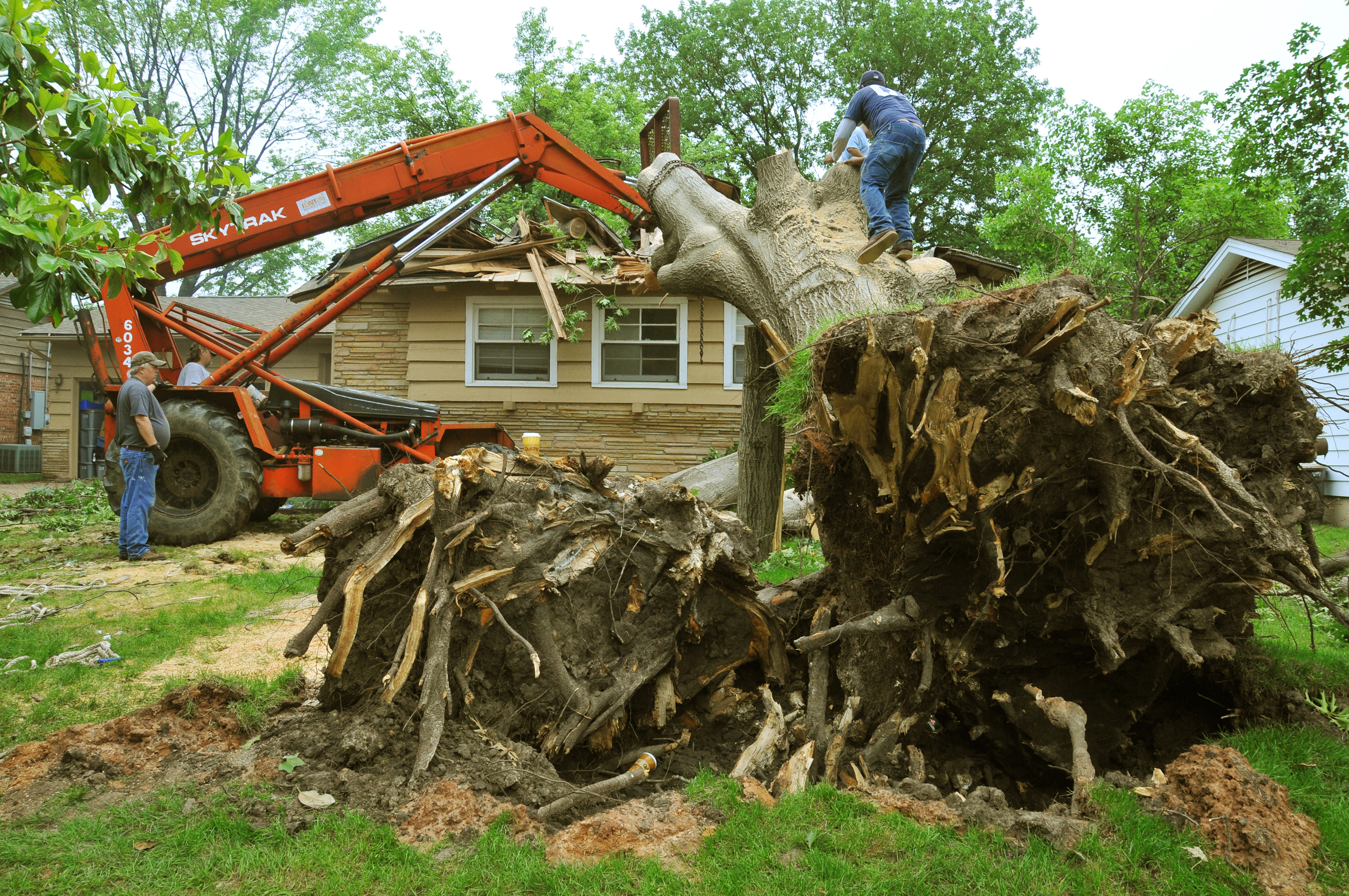 Why It is Good to Hire a Tree Removal Company