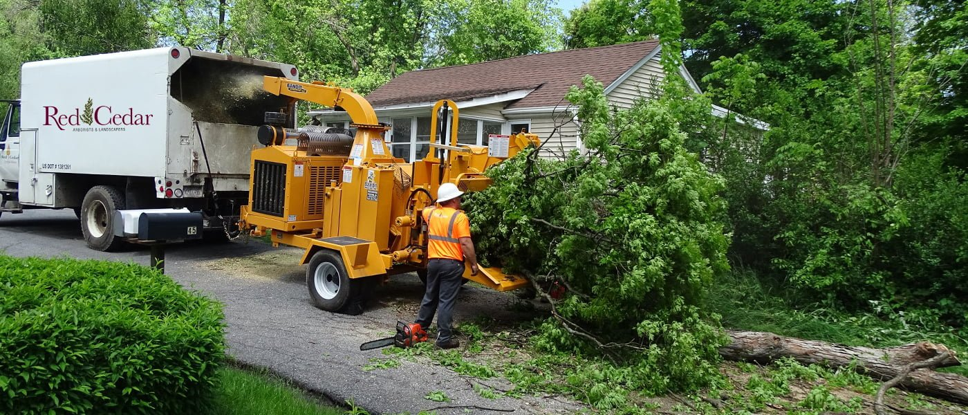 pick-professional-tree-services