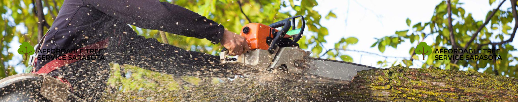 What Tree Removing Tips Should You Follow