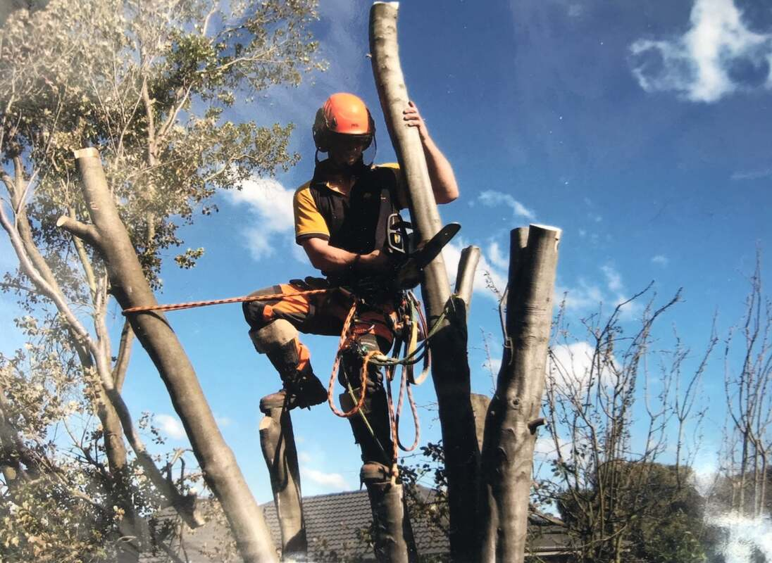 Things to Consider Before Hiring a Tree Service