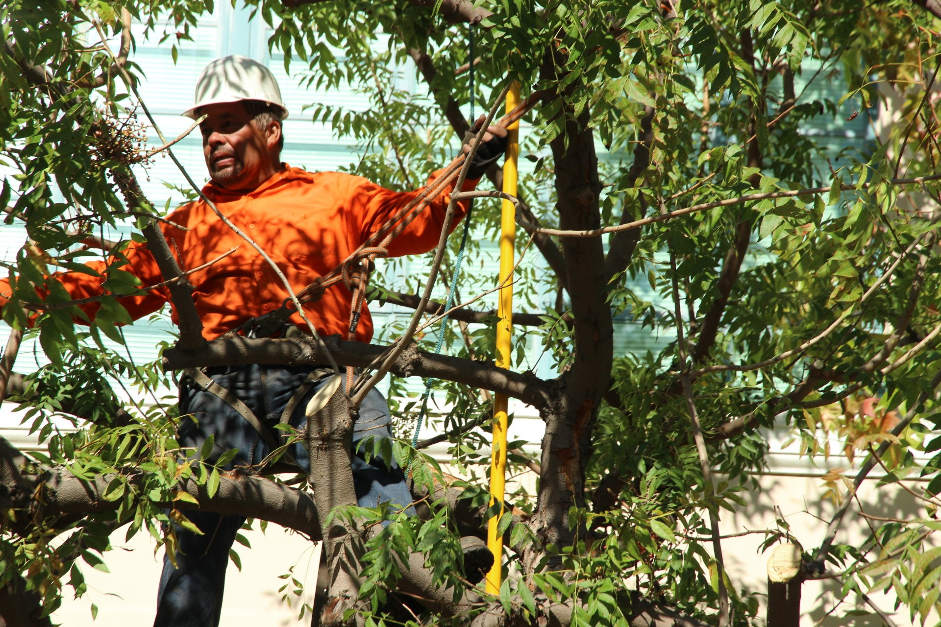Reasons to Hire a Tree Removal Service