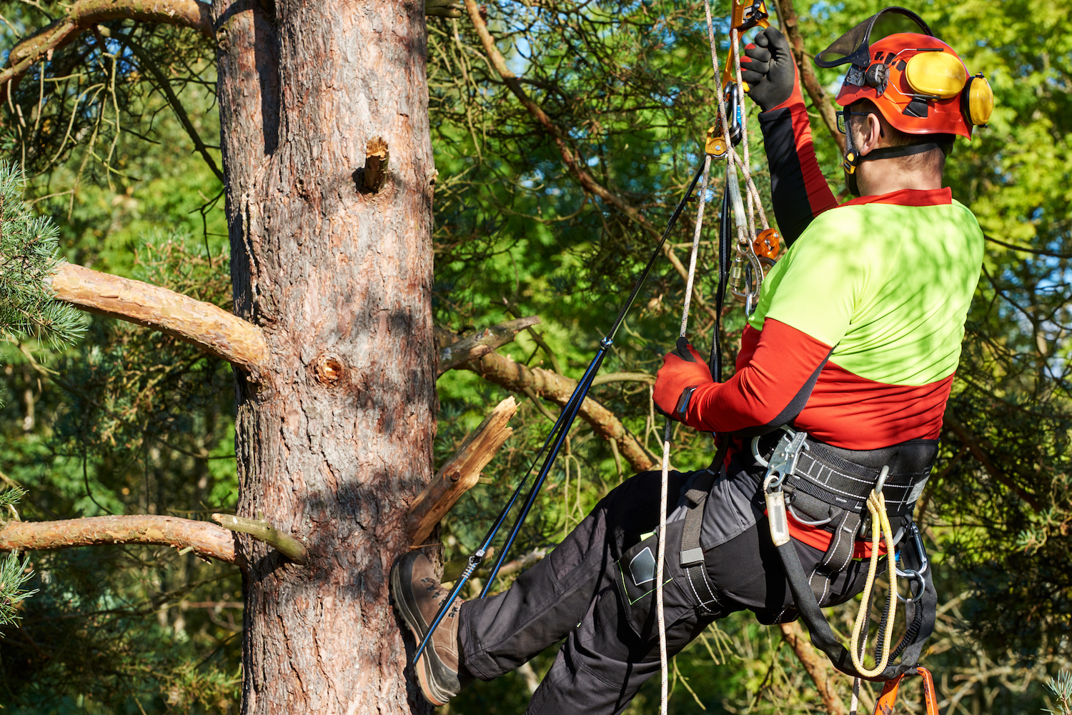 How an Arborist Can Help You Become Food Safe